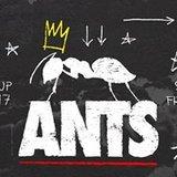 ANTS - Ushuaïa Ibiza